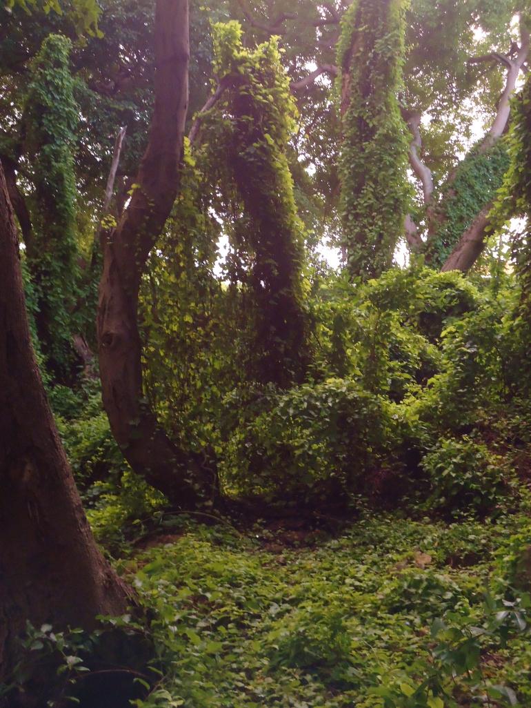 near playa chiki (little forest) western curacao